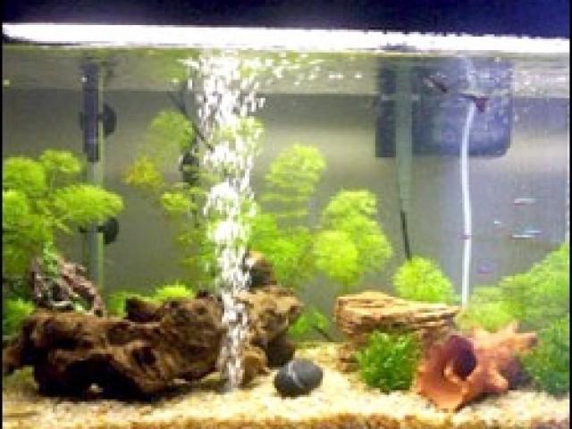 filtros para peceras animales y mascotas peces peceras
