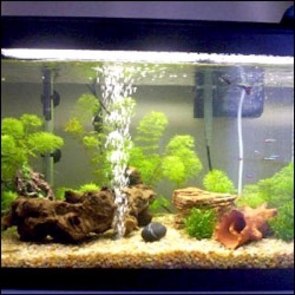 Filtros para peceras animales y mascotas peces for Filtro para pecera